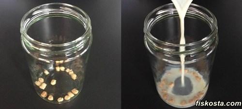 doğal yoğurt mayası nasıl yapılır evde?
