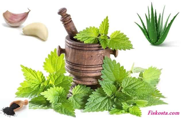 Egzama bitkisel tedavi